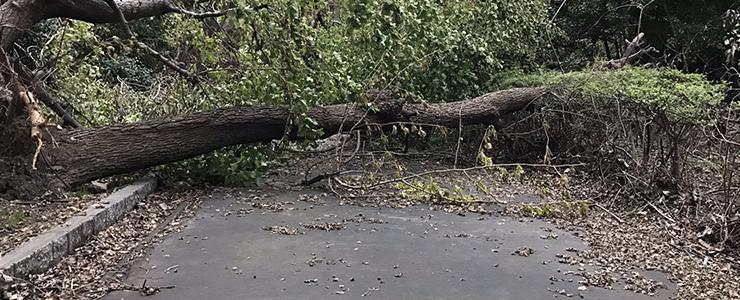 震災で道に倒れた木
